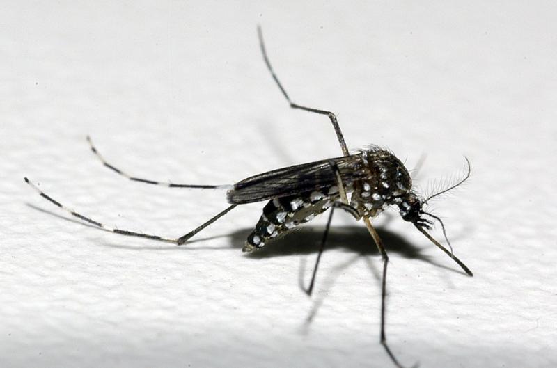 Casos de dengue crescem 339% no Brasil em 2019; quase mil cidades têm risco de surto