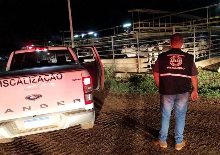 Carreta com 60 animais sem documentação sanitária é apreendido pela ADAB
