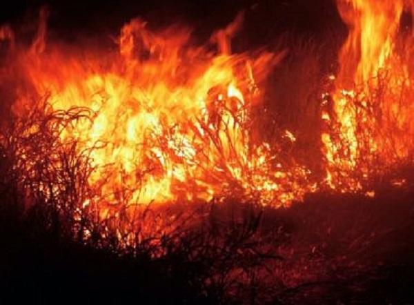 Incêndios destroem áreas de vegetação em Brejões e Vitória da Conquista