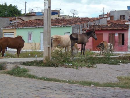 Animais continuam soltos nas ruas causando transtorno para população