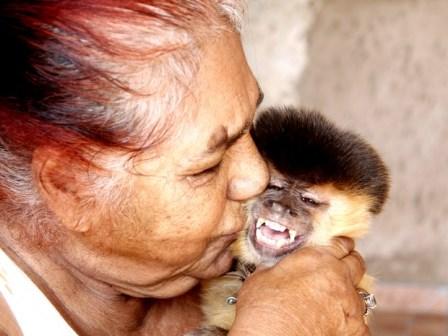 Macaco-prego Chico morre aos 38 anos: 'perdi um filho', lamenta a dona