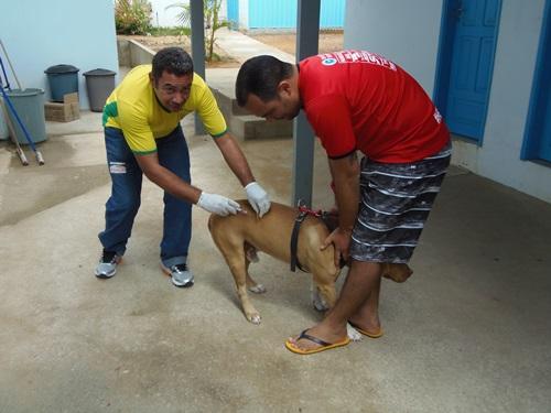 Campanha de vacinação antirrábica 6.701 cães e 1.309 gatos foram imunizados