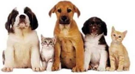 Convite: ASPAB (Associação dos Protetores de Animais de Brumado) realizará reunião deliberativa