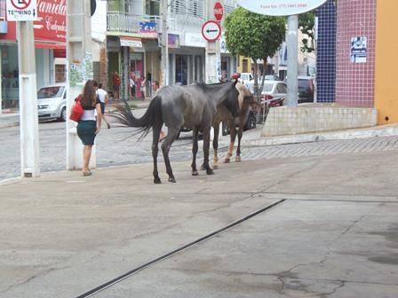 Cavalos são flagrados andando pelas ruas no centro da cidade