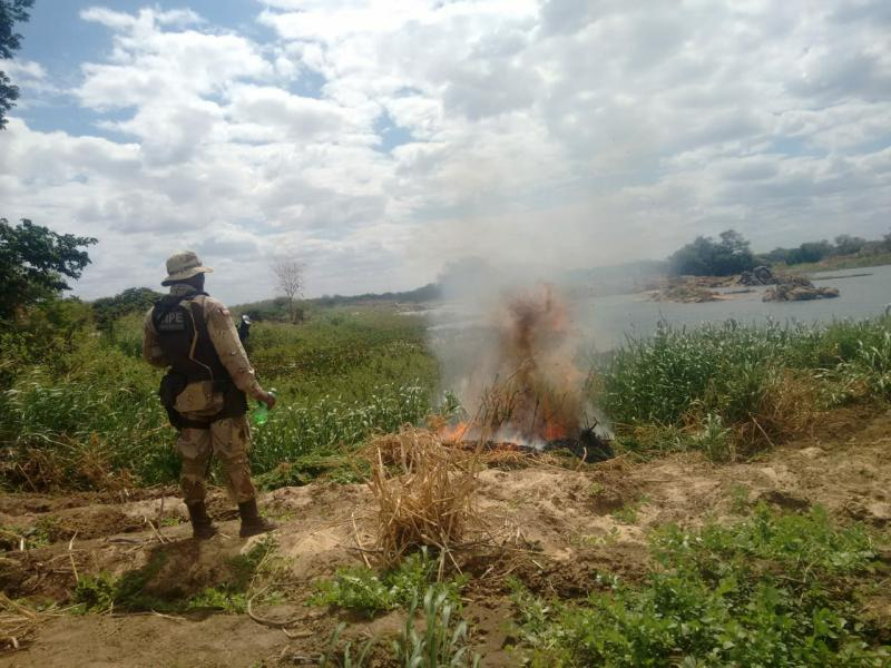 12 Toneladas de maconha são encontradas em operação conjunta no sertão da Bahia