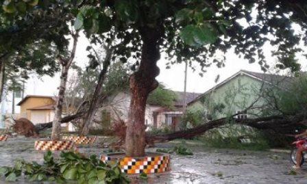 Temporal derruba árvores e danifica casas no extremo-sul baiano