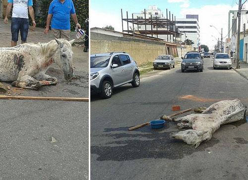 Carroceiro abandona cavalo doente no meio da rua, e o animal morre minutos depois