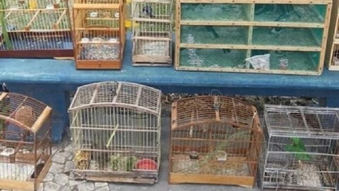Pássaros silvestres que seriam comercializados são apreendidos em Feira de Santana