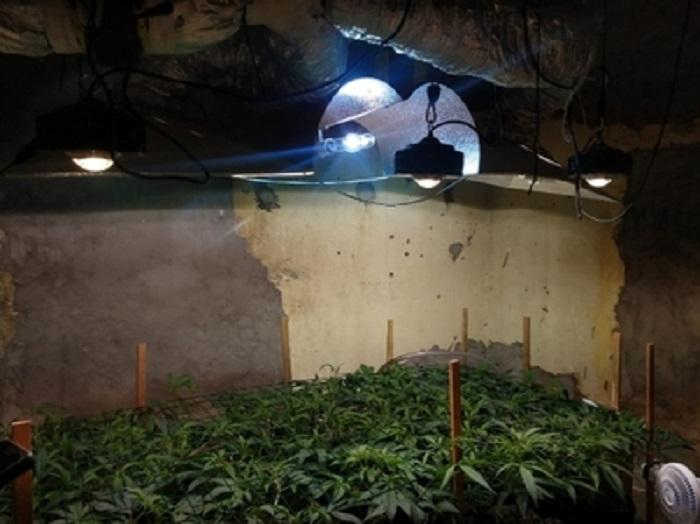 Plantação de maconha com mais de 600 pés e estufa artificial é encontrada na Bahia