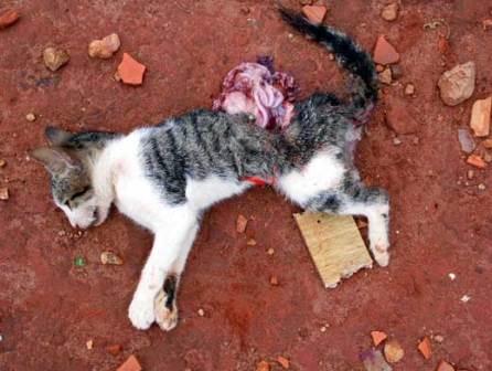 Adolescentes colocam bombas em gato que morre na explosão