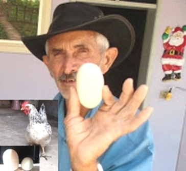 Mirangaba:Galinha põe ovo gigantesco no interior do município