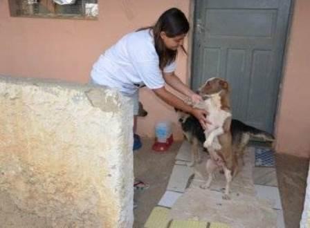 Protetora de animais denuncia maus-tratos e estupro de cadelas