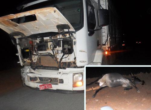 Animais provocam acidente na BA – 623, sentido Maetinga/Jânio Quadros