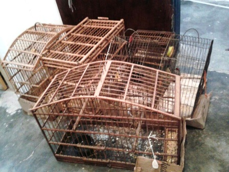 Ibicoara: Polícia faz apreensão de cigarros contrabandeados e pássaros silvestres