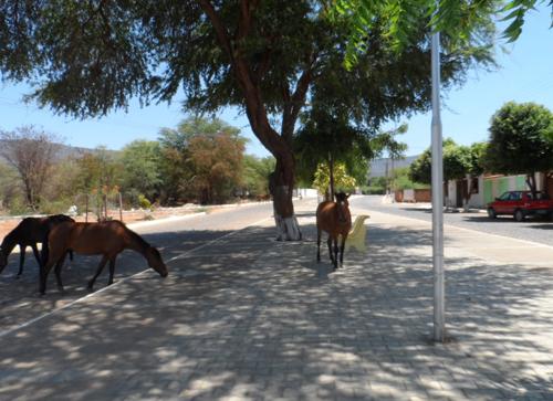 Animais continuam circulando livremente em diversos bairros da cidade