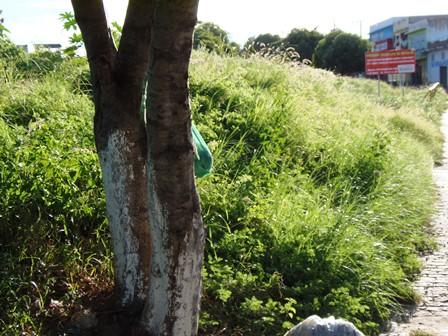 O povo na bronca: Por falta de limpeza o mato cresce e ratos e cobras começam aparecer