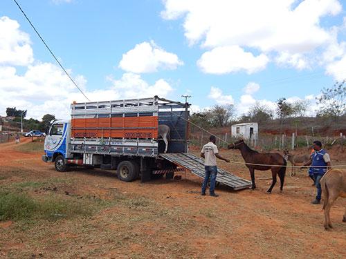 Prefeitura de Aracatu recolherá animais soltos nas ruas e proprietário só liberará o animal após pagamento de multa
