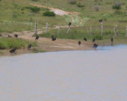 Moradores pedem retirada de Lixão que continua contaminando aguadas na zona rural