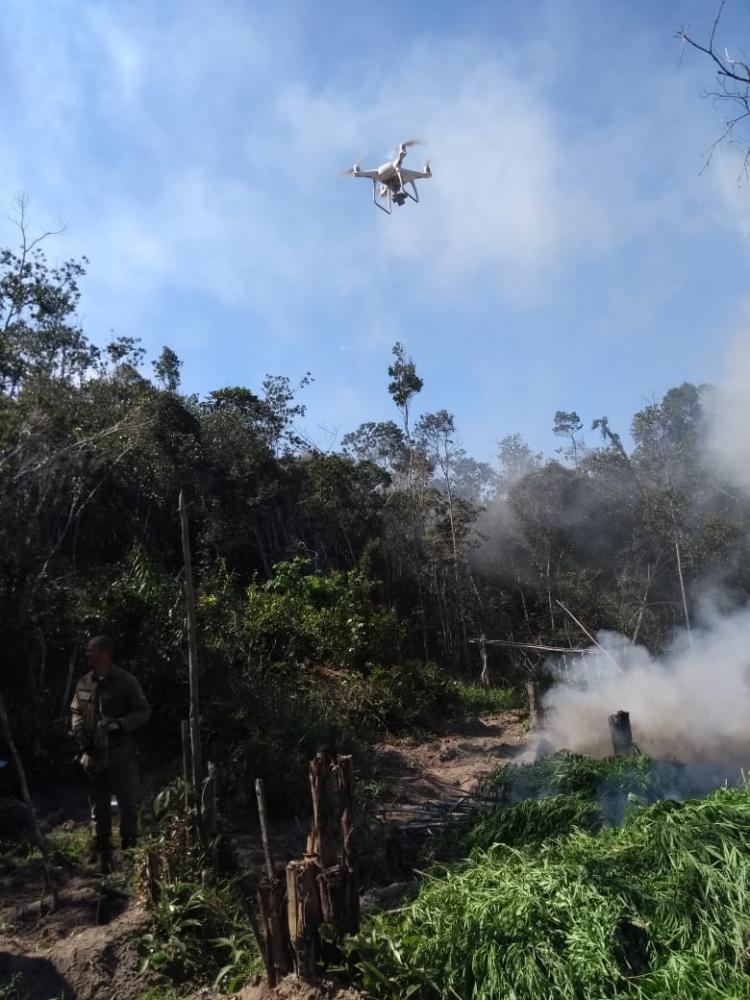 Drone ajudapolícia a descobrir plantação com mais de meia tonelada de maconha na Bahia