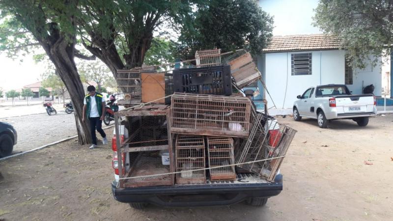 Secretaria de Agricultura e Meio Ambiente em ação de fiscalização realiza apreensão de pássaros silvestres