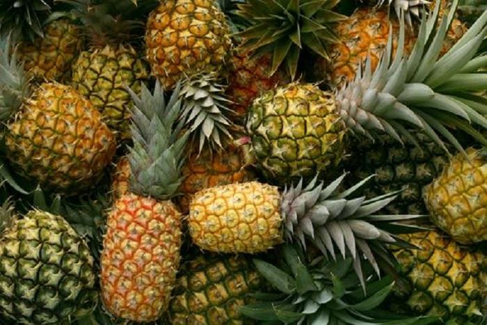 Baiana utiliza abacaxi híbrido para desenvolver novo tipo de curativo