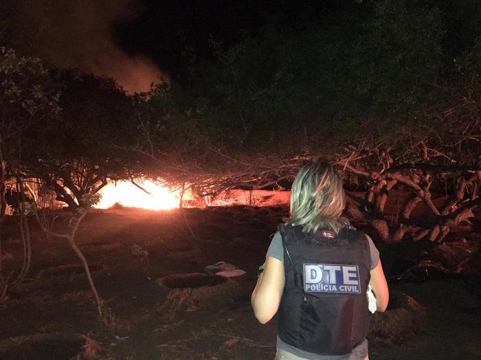 Polícia Civil localiza e destrói plantação com 50 mil pés de maconha na Bahia