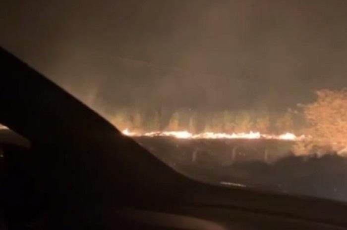 Incêndio atinge área de plantação de eucaliptos em Barra do Choça
