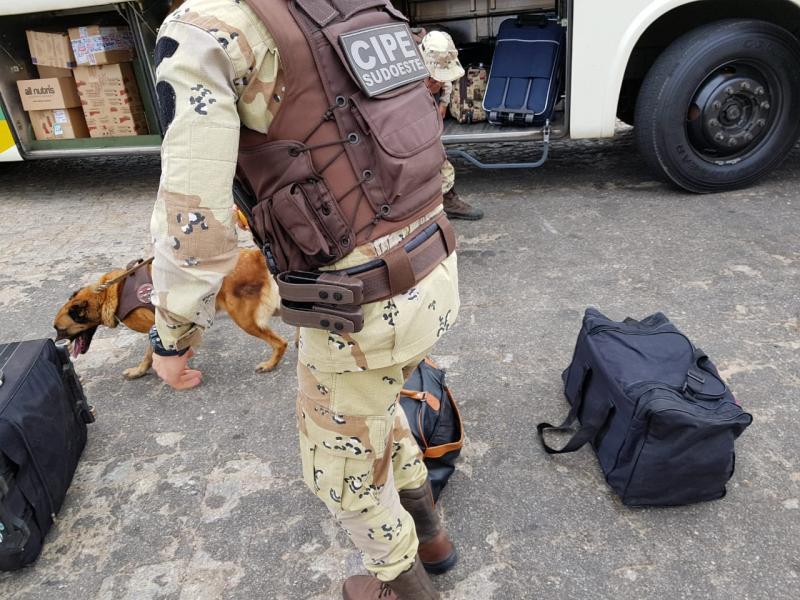 CIPE Sudoeste intensifica ações com cães no combate ao tráfico de drogas, armas e explosivos no Sudoeste Baiano