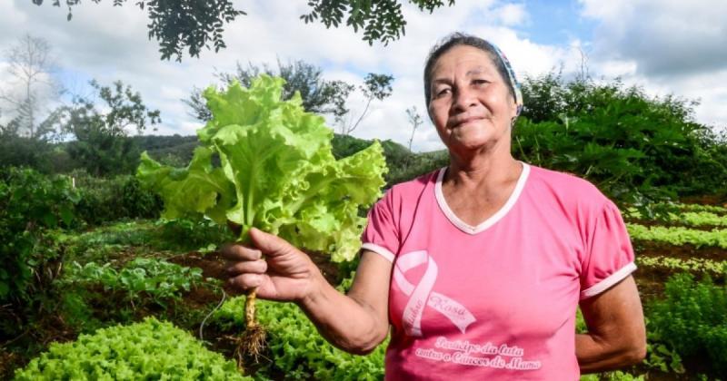 Governo da Bahia confirma adesão a garantia safra de 2020: 'Agricultor não sofrerá dano'