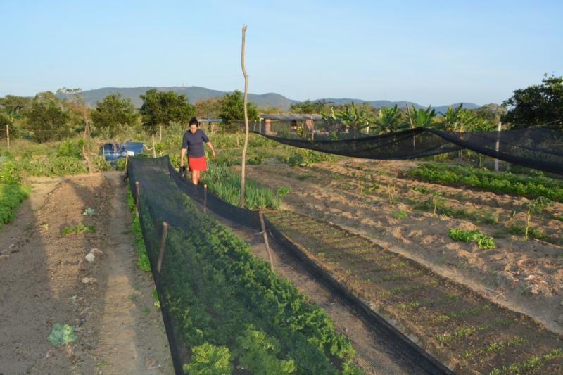 Após reanálise de perdas de safra mais 2.208 famílias passam a receber o seguro Garantia-Safra em Ibiassucê e Pindaí