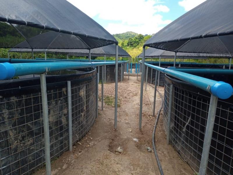 Caatiba: Tecnologia prevê aumento na produção de peixes na zona rural