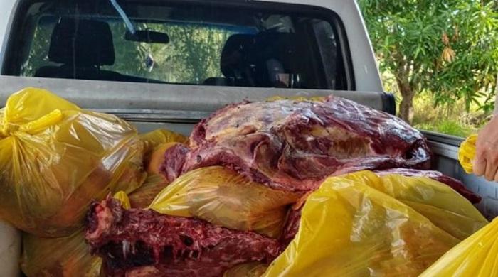 Mais de uma tonelada de carne de cavalo é apreendida em Jequié