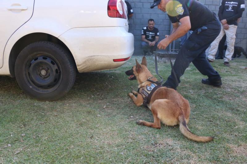 Seminário de Cães de Detecção reune forças estaduais, federais e municipais