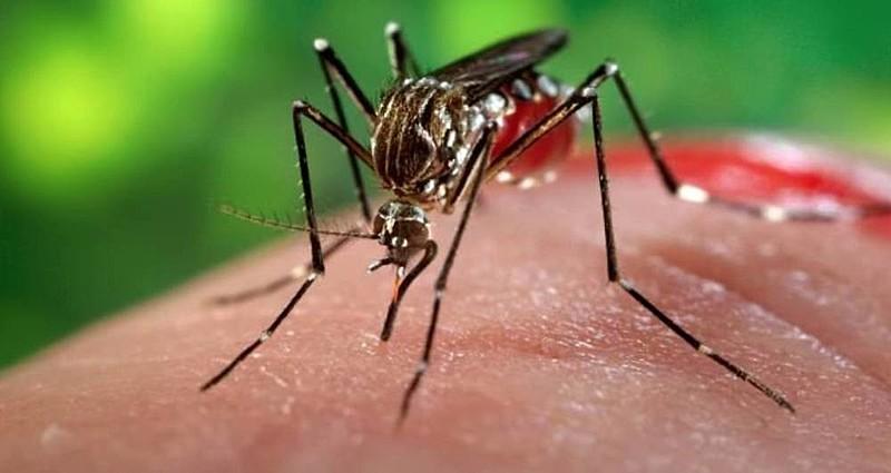 Casos de chikungunya crescem 434% na Bahia entre 2019 e 2020