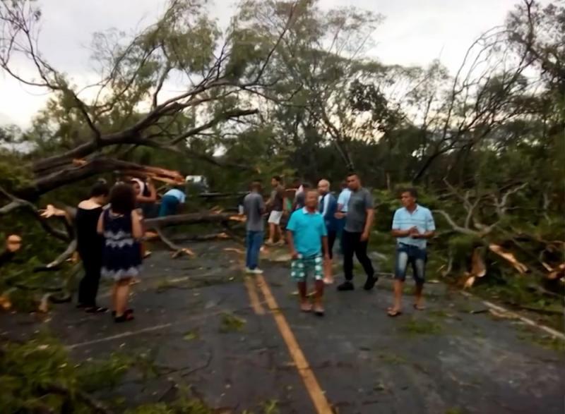 Chuva forte derruba 60 árvores e deixa BA-142 interditada em Andaraí