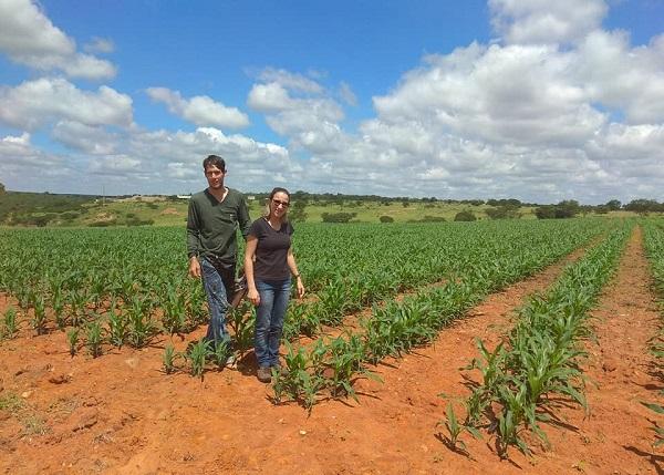 Agricultura de Malhada de Pedras vem se despontando e técnica agrícola visita plantação de milho irrigado