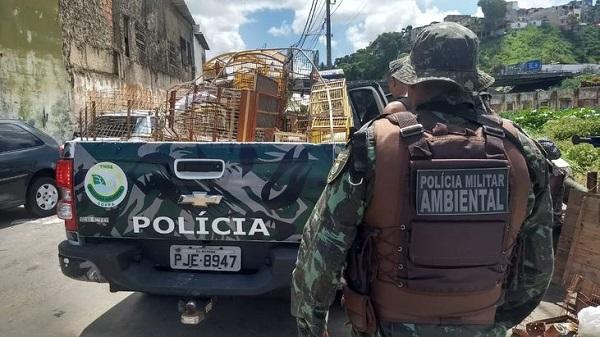'Operação Feira Livre' flagra 11 pessoas em comércio ilegal de animais na Bahia