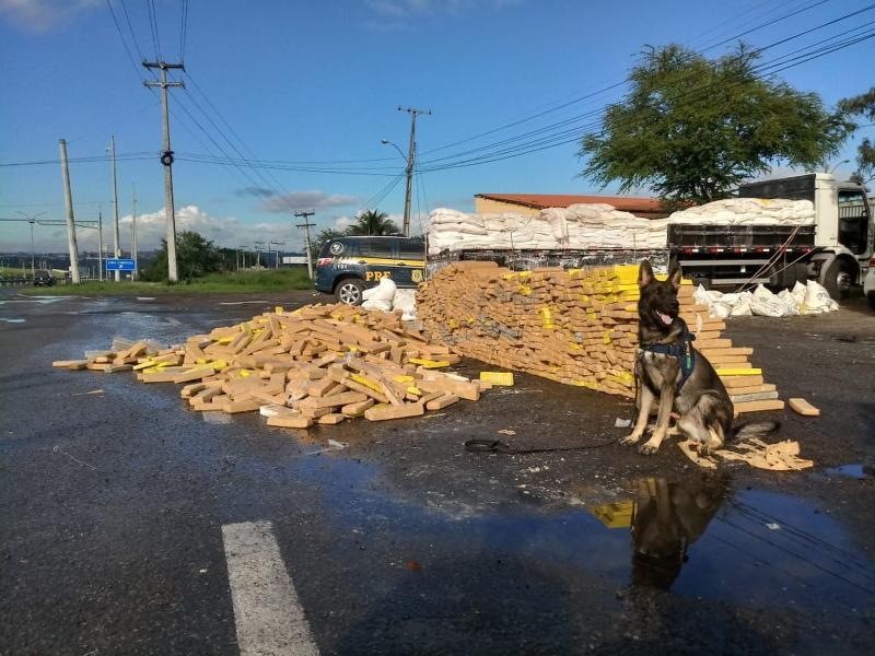 Bahia teve mais de seis toneladas de maconha apreendidas nas rodovias federais no primeiro semestre do ano, aponta PRF