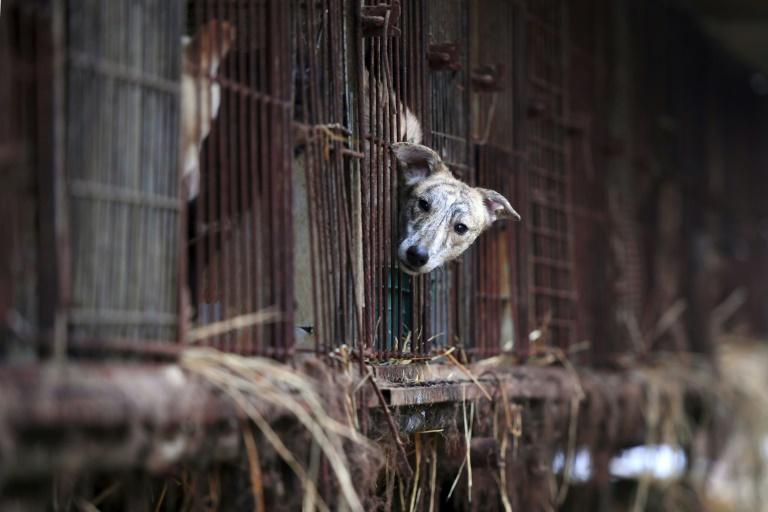 Justiça proíbe matar cachorros para consumo da carne na Coreia do Sul