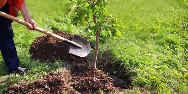 Empresa ceramista plantará 1 mil mudas de plantas em Ibiassucê após acordo com MP