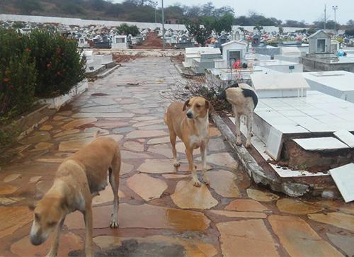 Cães 'tomam conta' do Cemitério Santa Inês em Brumado; Há suspeita de estarem comendo restos mortais
