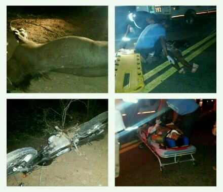 Animal na pista mais uma vez causa grave acidente na BA - 623, que liga Maetinga  a Jânio  Quadros