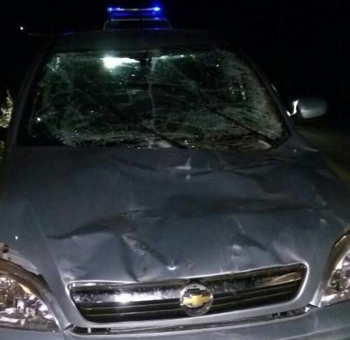 Animais na pista provocam acidente na Ba - 142, em Ituaçu