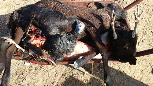 MATANÇA DE ANIMAIS ASSUSTA CRIADORES NO MUNICÍPIO DE GUANAMBI