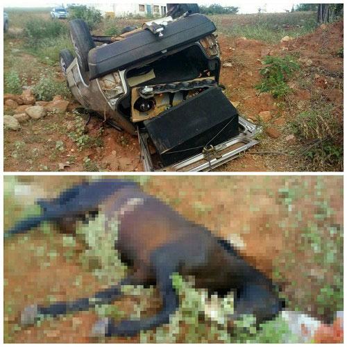 Oficial de Justiça de Jânio Quadros sofre acidente ao colidir veículo com animal em Maetinga