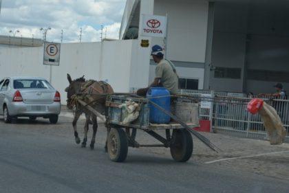 """Ordem Pública: cavalos vão usar """"fraldão"""" para evitar queda de fezes em vias públicas de Vitória da Conquista"""