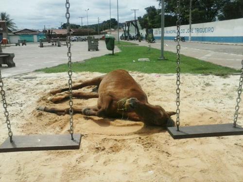Cavalo a beira da morte agoniza na Praça do Bairro São José