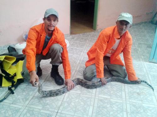 Lavrador leva tremendo susto ao encontrar serpente na zona rural de Barra da Estiva