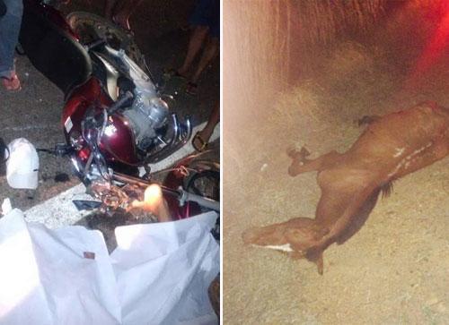 Motociclista morre ao colidir com animal na pista no município de Dom Basílio
