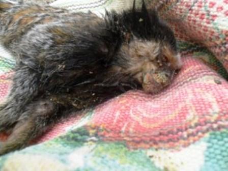 Cruz das Almas: Em dois dias, 6 micos são achados mortos